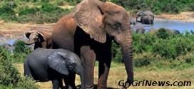 Zimbabwe – Afrique du sud : on tue des rhinocéros et éléphants pour les marchés d'Asie